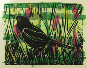 Claws-Beaks-and-Feathers-Mary-Muir-Blackbird-560x440