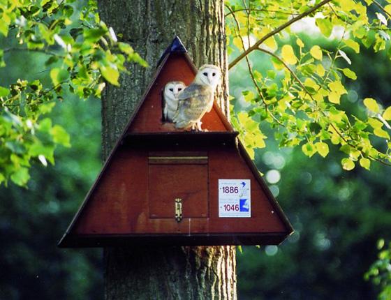 Nests-and-Nest-Building-activity-workshop
