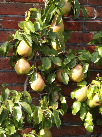 Raveningham Vegetable Day