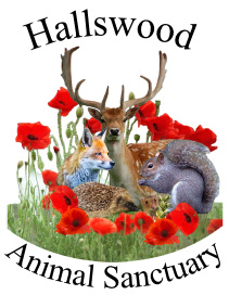 Hallswood-Animal-Sanctuary