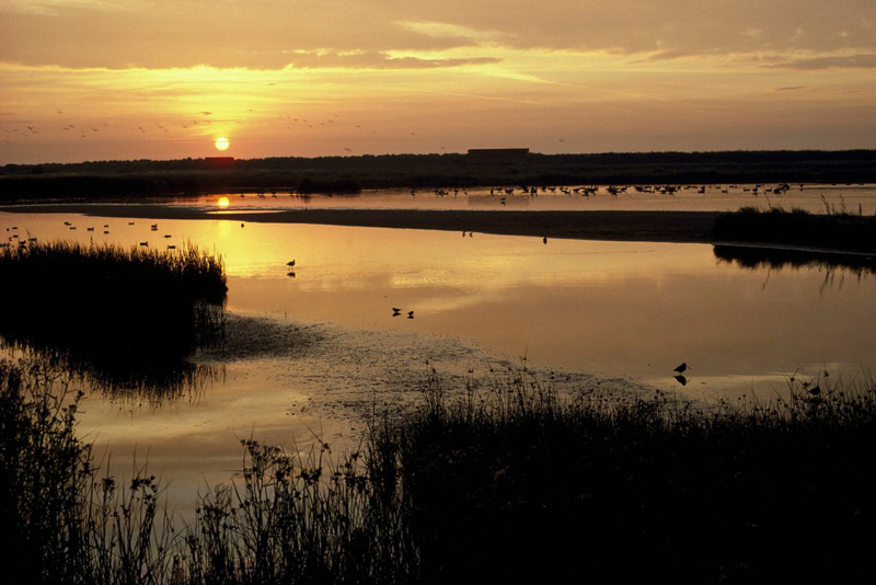 minsmere winter walks