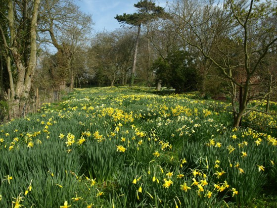 Spring at Hindringham Hall