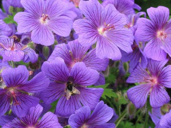 Bungay-Flower-Club-June