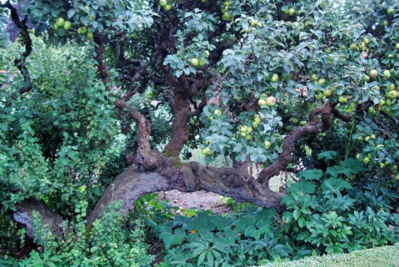 Raveningham Gardens Fruit and Vegetable Weeks