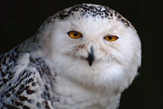 HALLOWEEN HOOT 2015 at the Suffolk Owl Sanctuary