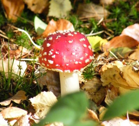 Fungi Forays