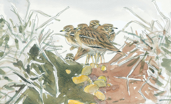 Birds in Norfolk Art Exhibition