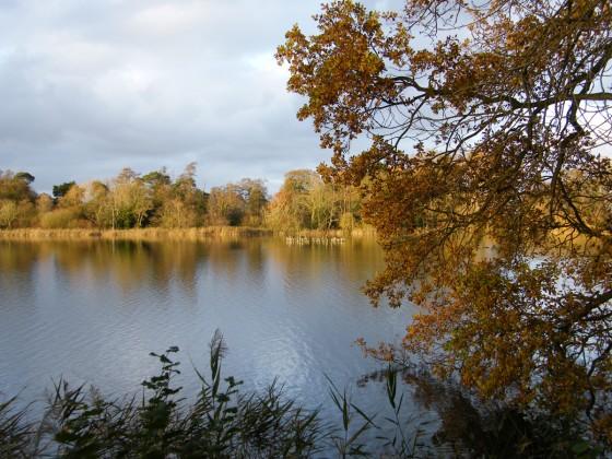 Autumn Colours Tour at Fairhaven Garden