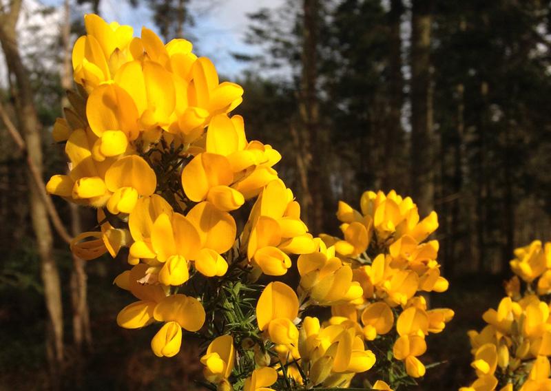Bungay Flower Club Meeting image copyright-imajaz-limited