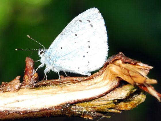Suffolk Butterflies