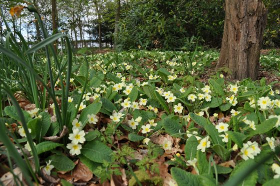 Spring Guided Walk