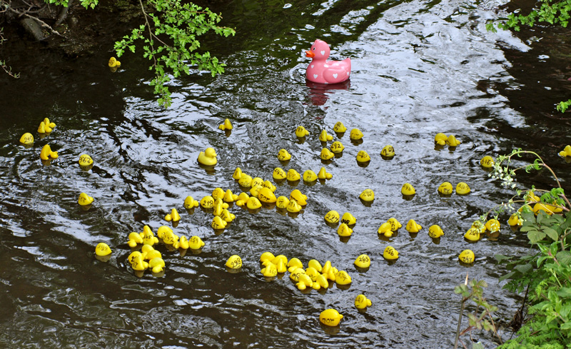 Wymondham Abbey Duck Race