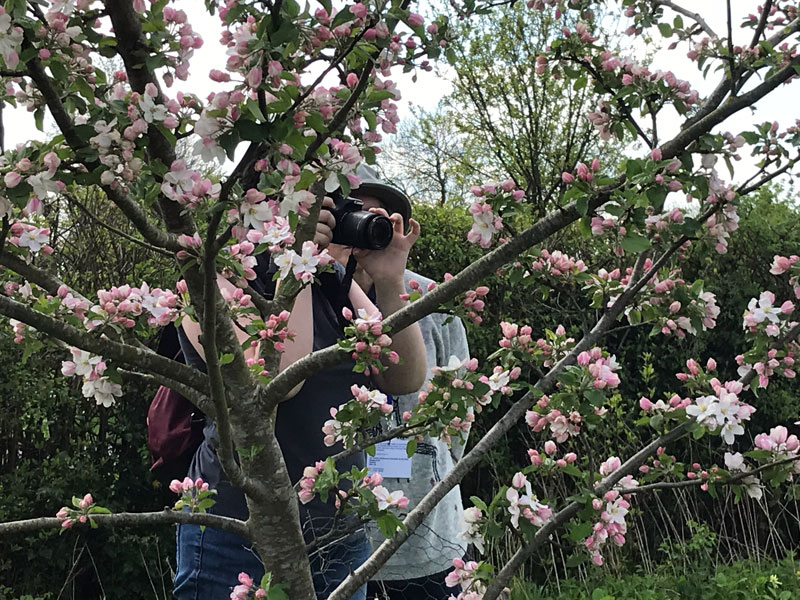 Blooming Orchards