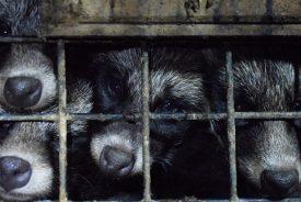 China's Fur Trade