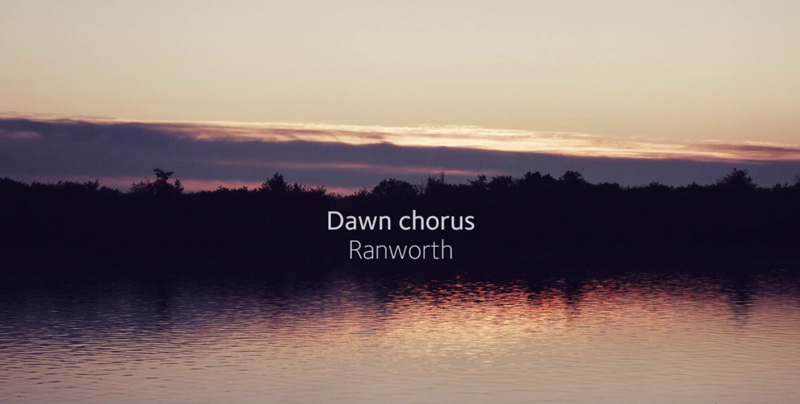 Summer dawn chorus at Ranworth Broad