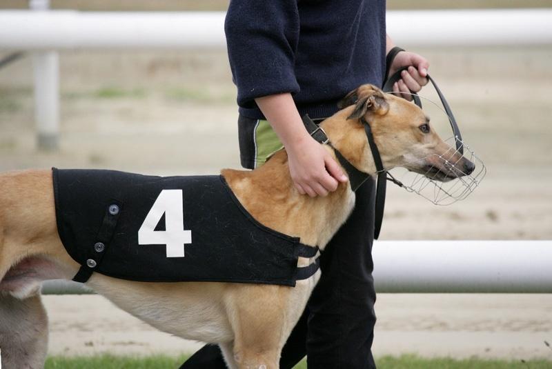 East Anglian Greyhound Derby